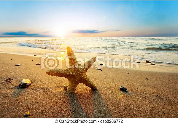 夏天, 海灘, 陽光普照, starfish - csp8286772