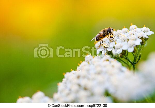 彈跳花, 天, 蜜蜂 - csp9722130
