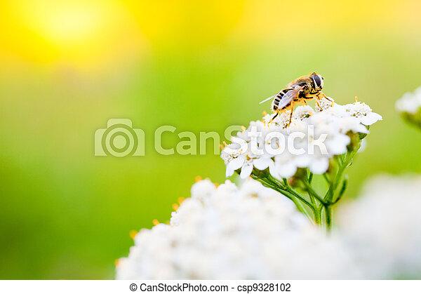 彈跳花, 天, 蜜蜂 - csp9328102