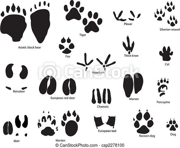 形跡, 動物, 標題 - csp2278100