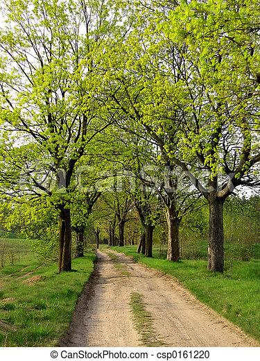 春天, 路 - csp0161220