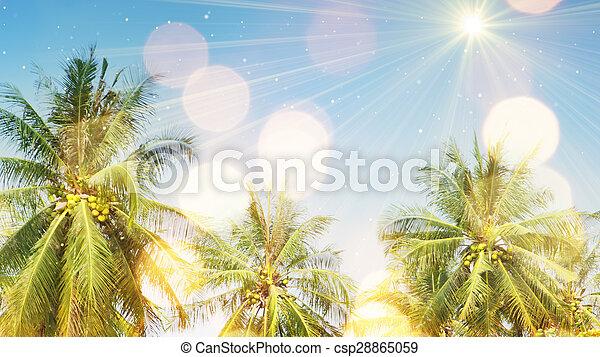 棕櫚樹, 陽光 - csp28865059