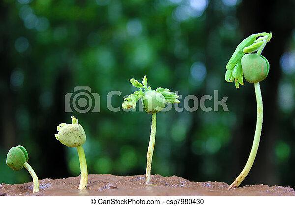植物, growth-baby, 植物 - csp7980430