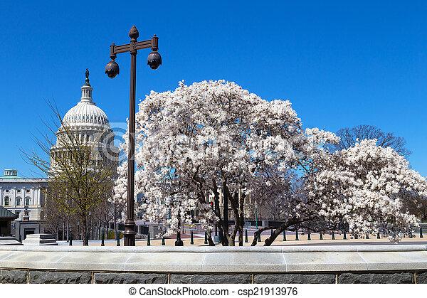 樹, 開花, 國會大廈大樓 - csp21913976
