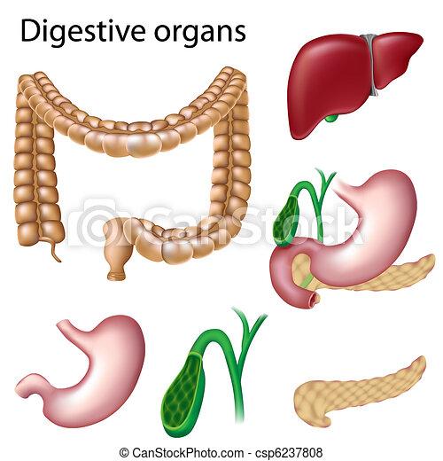 消化的器官, 被隔离 - csp6237808
