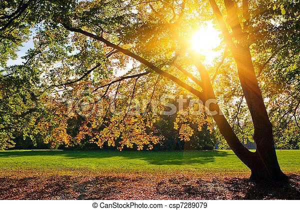 秋天, 陽光普照, 葉子 - csp7289079