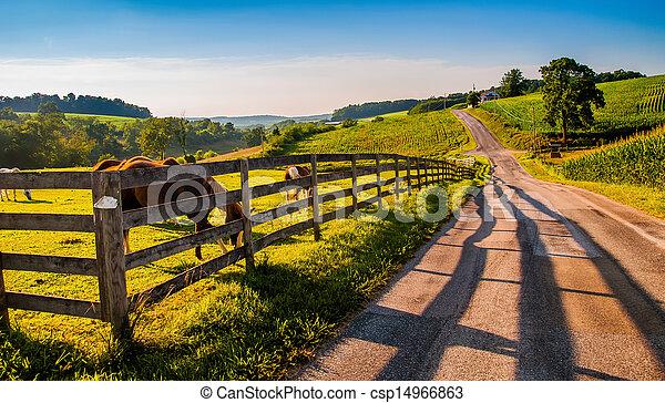 馬, 柵欄, 國家, 約克, 縣, 鄉村, 向前, backroad, pa. - csp14966863