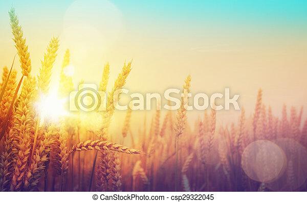 黃金, 藝術, 陽光普照, 領域, 小麥, 天 - csp29322045